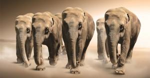 Optimized-herd-of-elephants