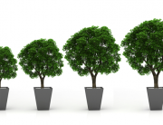 blog - hiring the right vp